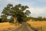 Country road, oaks, clouds, Amador County, Calif.