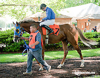 Ledokol before The Oh Say Stakes at Delaware Park on 6/29/13