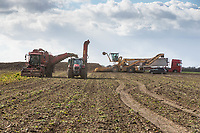 12.3.2021 Contractor Richard Ivatt lifting the last of the sugar beet in the 2020 - 2021 campaign as haulage contractor cart the beet into Newark factory <br /> ©Tim Scrivener Photographer 07850 303986<br />      ....Covering Agriculture In The UK....