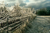 ice storm leaves ice covering wire fence and tree