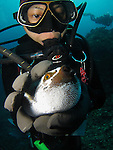 Orchid Island, Taiwan -- Taiwanese diver squeezing a pufferfish.<br /> <br /> If a fish could scream you'd hear a cry for help! The fear in the puffer's eyes is almost palpable!