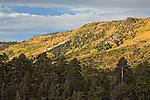 Ponderosa pine trees and fall colors in Escudilla Wilderness Area, Arizona