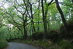 Friday Street. Leith Hill Surrey. The road to the Hamlet of Friday Street, on the Lower Slopes of Leith Hill. 2010 UK