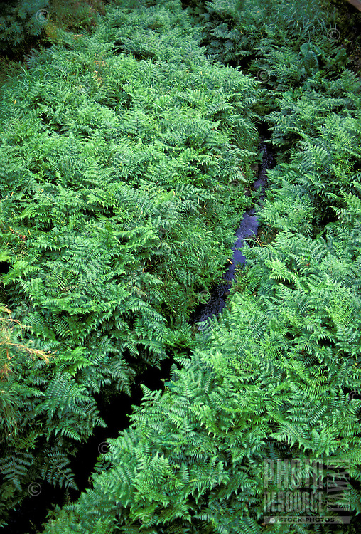 Stream running through the lush vegetation of winward Oahu