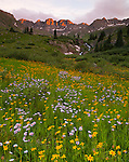 San Juan Mountains, CO<br /> American Basin with showy daisy (Erigeron speciosus) and sneezeweed (Dugaldia hoopesii) in a meadow beneath Handies Peak at sunset.
