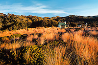 Golden tussock lit up by afternoon sun and Gouland Downs Hut on Heaphy Track, Kahurangi National Park, Nelson Region, New Zealand