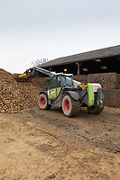 1-3-2021 A farmer users a Tel-Handler to to push beet up on the clamp  towards the end of the season in Lincolnshire.<br />  ©Tim Scrivener Photographer 07850 303986<br />      ....Covering Agriculture In The UK....