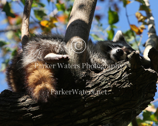 Various images from Audubon Zoo in New Orleans.