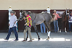 September 19, 2015. Iron Fist (#4) and Mr. Z (right #10) in the paddock before the the $1,000,000 Grade II Pennsylvania Derby, one and 1/8th miles for three-year-olds, at  Parx Racing in Bensalem, PA.  (Joan Fairman Kanes/ESW/CSM)