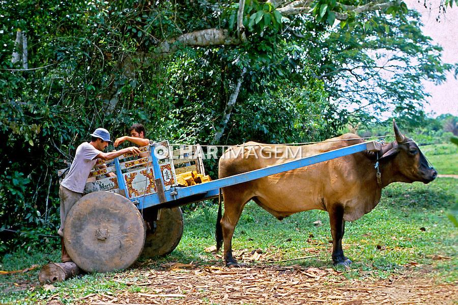 Carro de boi em comunidade do Santo Daime. Rio Branco, Acre. 1987. Foto de Saulo Petean.