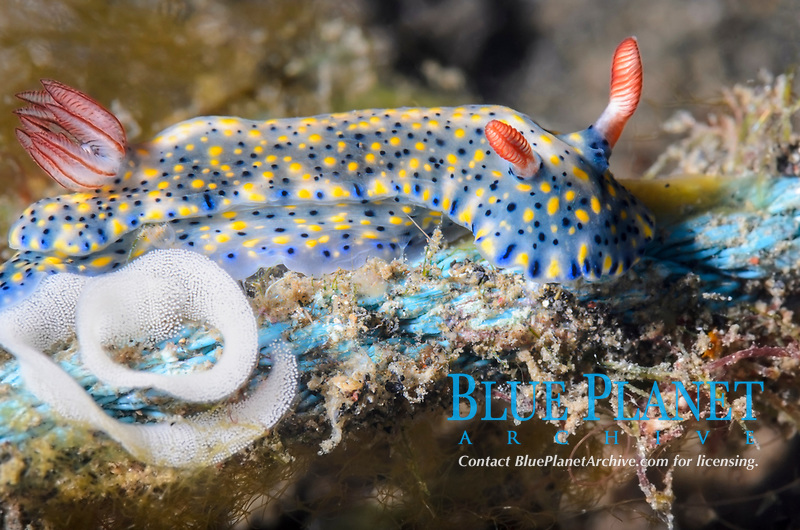 Lembeh Strait, North Sulawesi, Indonesia, Pacific Ocean