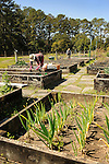 Spring Island, SC. Community garden with raised beds. Early spring gardening.