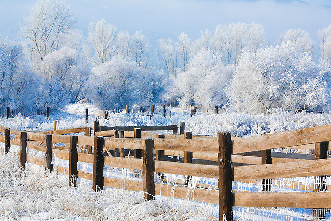 Heavy frost covers the trees and brush but has already melted off of the fence wood