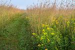 Nachusa Grasslands Natural Area, Illinois:<br /> Path through a summer tallgrass prairie with big bluestem and goldenrod, Nachusa Grasslands, Nature Conservancy