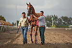 Dayatthespa being lead over to the saddling paddock for the Herecomesthebride Stakes(G3T)at Gulfstream Park, Hallandale Beach Florida. 03-11-2012