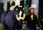 October 26, 2015: Honor Code arrives at the barn from New York, while owner William Farish converses with Beholder's trainer, Richard Mandella.  Honor Code trained by Claude McGaughey and owned by Lane's End Racing, and Dell Ridge Farm, entered in the Breeder's Cup Classic Grade 1 $5,000,000.  Candice Chavez/ESW/CSM
