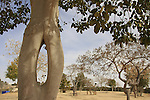 G-343 Tree garden in Revivim