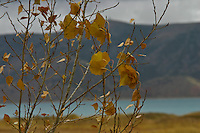 Fall is nearly done,  winter is nearly here at Bear Lake, Utah.