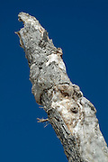 Close-up of an dead / rotten tree