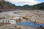 Elwha River Restoration, Elwha Dam removal, March 16, 2012, emptied reservoir, Lake Aldwell, returning vegetation, Largest dam removal project in US history, Olympic National Park, Olympic Peninsula, Washington State, Pacific Northwest, USA, North America