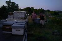 The beekeepers transport the hives at nightfall so that the bees remain calm in the hives./Les ruches sont transportées à la tombée de la nuit par les apiculteurs pour que les abeilles soient tranquilles dans les ruches.