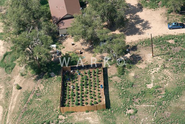 Homespun pot farm near Fowler, Colorado. July 2014. 87110