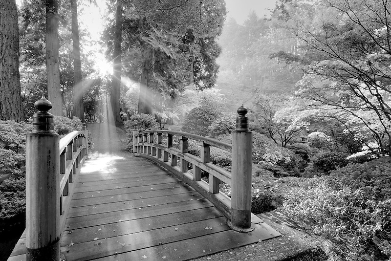 Bridge, sun rays through fog, and fall colored japanese maples. Portland Japanese Gardens, Portland, Oregon