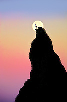 Full moon stting over rock at Bandon Beach with seagull. Bandon, Oregon
