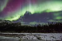 Violet and green aurora borealis curtains lights the nights sky in Alaska's Brooks Range, Arctic, Alaska