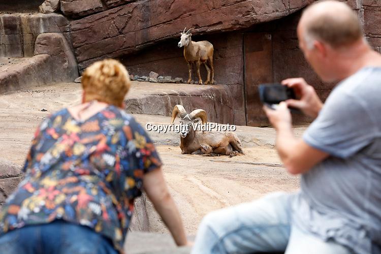 """Foto: VidiPhoto<br /> <br /> ARNHEM – Eindelijk konden abonnementhouders en andere bezoekers van Burgers' Zoo in Arnhem dinsdag weer mondjesmaat naar de dierentuin. Voor het eerst na een sluiting van twee maanden ging de poort weer open. In de honderdjarige historie van Burgers' was het park nog geen dag dicht geweest, ook niet tijdens de oorlog. Voorlopig kunnen bezoekers alleen naar binnen als ze vooraf reserveren. Vervolgens krijgen ze een tijdcode waarop ze verwacht worden. Volgens een woordvoerder van het park komen vooral bij de ingang de mensen bij elkaar. Op sommige plekken is een eenrichtingsroute ingesteld en overal staan borden en suppoosten die de bezoekers er op wijzen om anderhalve meter afstand te houden. Het publiek reageert volgens het park enthousiast op de hernieuwde kennismaking. """"Maar vooral onze werknemers hebben de gezelligheid gemist."""""""
