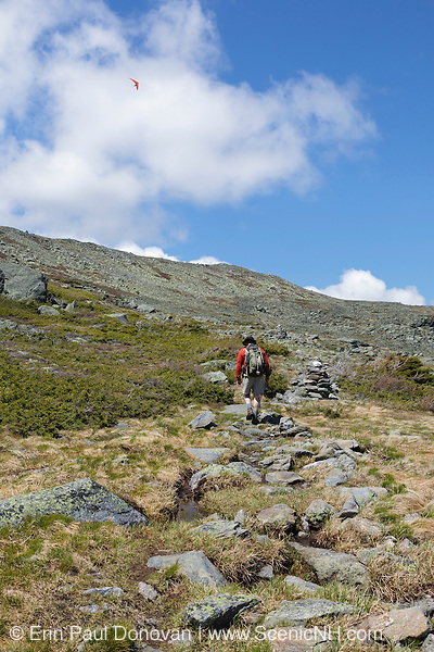 A hiker travels along the Alpine Garden Trail on Mount Washington in the White Mountains, New Hampshire USA during the summer months. A hang glider can be seen in the sky.