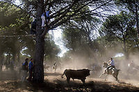 A horseman aims his lance at a bull in the village of Tordesillas during the bull of the plain 'Toro de la Vega' festival, 13 September 2005. The festival is one of the oldest in Spain with roots dating back to the fifteenth century. The bull has to be enticed across the river from the village to the plain 'Vega' before it can be killed to honour the 'Virgen de la Pena'. (c) Pedro ARMESTRE