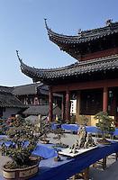 Asie/Chine/Jiangsu/Nankin: Quartier du Temple de Confucius - Détail des bonsaïs devant le temple