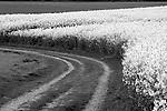 Europa, DEU, Deutschland, Nordrhein Westfalen, NRW, Rheinland, Niederrhein, Krefeld, Agrarlandschaft, Fruehling, Raps, Bluehendes Rapsfeld, Kategorien und Themen, Landwirtschaft, Landwirtschaftlich, Agrar, Agrarwirtschaft, Natur, Naturfoto, Naturfotos, Naturfotografie, Naturphoto, Naturphotographie, Landschaft, Landschaften, Landschaftsfoto, Landschaftsfotografie, Landschaftsphoto, Landschaftsphotographie<br /> <br /> <br /> [Fuer die Nutzung gelten die jeweils gueltigen Allgemeinen Liefer-und Geschaeftsbedingungen. Nutzung nur gegen Verwendungsmeldung und Nachweis. Download der AGB unter http://www.image-box.com oder werden auf Anfrage zugesendet. Freigabe ist vorher erforderlich. Jede Nutzung des Fotos ist honorarpflichtig gemaess derzeit gueltiger MFM Liste - Kontakt, Uwe Schmid-Fotografie, Duisburg, Tel. (+49).2065.677997, schmid.uwe@onlinehome.de, www.image-box.com]