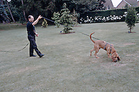 Police officer dog handler training with a police bloodhound. This image may only be used to portray the subject in a positive manner..©shoutpictures.com..john@shoutpictures.com
