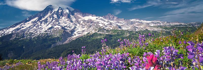 Lupines and paintbrush with Mt. Rainier and lenticular cloud. Mt. Rainier National Park, Washington