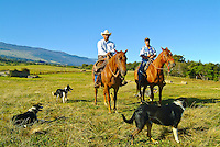 Hawaiian cowboys - father and son - and their dogs at Haleakala Ranch, Upcountry Maui.