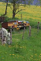 In Switzerland, the hives are often set up in and protected by a chalet.///En Suisse les ruches sont souvent protégées et installées dans un châlet.