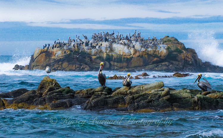 """MONTEREY MARITIME MEETING""<br /> <br /> Marine birds waiting out a storm near Monterey."