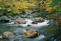White River and American Beech<br /> Green Mountain National  Forest<br /> New England<br /> Vermont