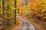 Autumn Road, Moshannon State Forest, Pennsylvania
