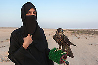 "United Arab Emirates (UAE). Abu Dhabi. Ayesha Matar Al Mansoori holds a falcon on her arm at the training place of Abu Dhabi Falconers Club. Ayesha Al Mansoori is the first woman falconer in the UAE and the only member of the Ladies Falconer Club. She wears a black abaya and a niqab. The abaya, sometimes also called an aba, is a simple, loose over-garment, essentially a robe-like dress, worn by some women in parts of the Muslim world and the Arabian Peninsula. The abaya covers the whole body except the head, feet, and hands. It can be worn with the niqāb, a face veil covering all but the eyes.The muslim women who wear the niqab do so in places where they may encounter non-mahram (non-related) men. Falcons are birds of prey in the genus Falco, which includes about 40 species. Adult falcons have thin, tapered wings, which enable them to fly at high speed and change direction rapidly. Additionally, they have keen eyesight for detecting food at a distance or during flight, strong feet equipped with talons for grasping or killing prey, and powerful, curved beaks for tearing flesh. Falcons kill with their beaks, using a ""tooth"" on the side of their beaks. The United Arab Emirates (UAE) is a country in Western Asia at the northeast end of the Arabian Peninsula. 20.02.2020  © 2020 Didier Ruef"