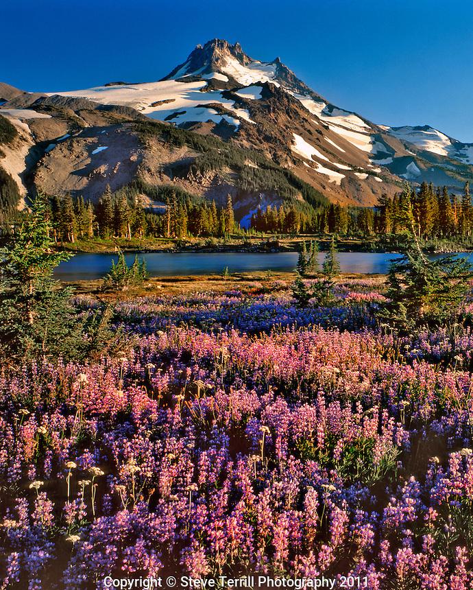 Mt Jefferson and field of lupine along Russell Lake in Mt Jefferson Wilderness, Oregon