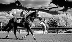CHARLES TOWN, WEST VIRGINIA - APRIL 20: (Images made with a camera with an infrared converted sensor) Scenes from around the track on Charles Town Classic Day at Charles Town Races and Slots in Charles Town, West VIrginia. Scott Serio/Eclipse Sportswire/CSM