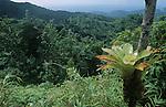 Parc national du Morne Trois Pitons Ile de la Dominique.
