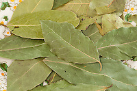 Lorbeerbaum, getrocknete Lorbeerblätter, Lorbeer-Baum, Echter Lorbeer, Edel-Lorbeer, Lorbeerblatt, Laurus nobilis, Bay Tree, Sweet Bay