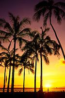 Colourful sunset behind palm trees at Waikiki beach park