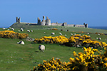 Great Britain, England, Northumberland, Near Alnwick: ruins of medieval Dunstanburgh Castle