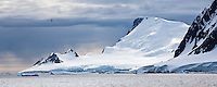 Mountains and bird in Antarctica
