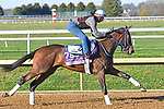 November 2, 2020: Simply Ravishing, trained by trainer Kenneth G. McPeek, exercises in preparation for the Breeders' Cup Juvenile Fillies at Keeneland Racecourse in Lexington, Kentucky.  Jessica Morgan/Eclipse Sportswire/Breeders Cup
